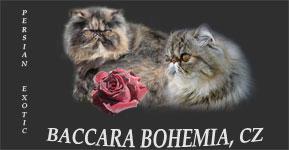 BACCARA BOHEMIA cattery